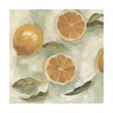 Citrus Study in Oil III Prints by Emma Scarvey