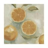 Citrus Study in Oil I Prints by Emma Scarvey