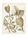 Ochre Botanical III Prints by Vision Studio