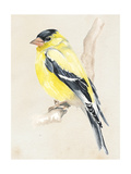 Little Bird on Branch III Art by Jennifer Paxton Parker