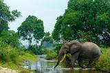 African forest elephant, in Lekoli River. Odzala-Kokoua National Park. Congo Fotografisk tryk af Roger De La Harpe