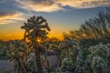 USA, Arizona, Tucson, Tucson Mountain Park Photographic Print by Peter Hawkins