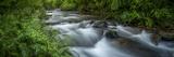 Mountain river. Forest interior. Bwindi Impenetrable Forest. Uganda Fotografisk tryk af Roger De La Harpe