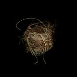 Construction 7: Birds Nest Fotografie-Druck von Doris Mitsch