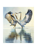 Great Blue Herons Premium Giclee Print by Max Hayslette