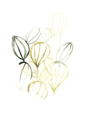 Seed Spectrum II Premium Giclee Print by June Erica Vess