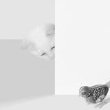 Peek a Boo Posters av Jon Bertelli