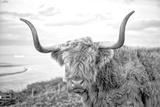Highland Cows II Fotografisk tryk af Joe Reynolds