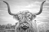 Highland Cows I Reproduction photographique par Joe Reynolds
