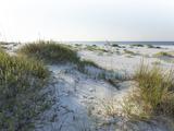 Detailed Wide Angle Shot of Pristine White Sand Dunes and Native Shoreline Plants in Pensacola Flor Fotografie-Druck von  forestpath