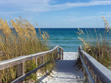 Sandy Boardwalk Path to a Snow White Beach on the Gulf of Mexico with Ripe Sea Oats in the Dunes Lámina fotográfica por  forestpath