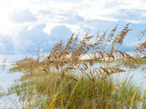 Golden Sea Oats Waving in the Breach on a Pristine Beach in Pensacola, Florida Lámina fotográfica por  forestpath