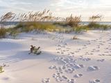 Footprints in the Sand at Sunset in the Dunes of Pensacola Beach, Florida. Fotografie-Druck von  forestpath