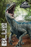 Jurassic World Fallen Kingdom - Blue Affiches