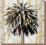 Sabal Luxe Stretched Canvas Print by Paul Duncan