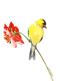 Goldfinch And Red Flower 1 Prints by Suren Nersisyan