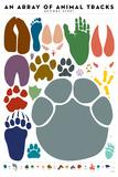 An Array of Animal Tracks Láminas