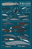 A Sea Full of Cetaceans: Whales, Dolphins and Porpoises Kunstdrucke