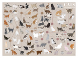 Cats - Categorized Poster