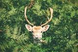 Deer in Bush Pôsters