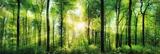 Bright Summer Forest Print