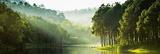 Mystic Forest Lake Julisteet