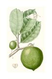 Turpin Fruit III Posters