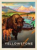 Yellowstone National Park: Bison Crossing Láminas por  Anderson Design Group