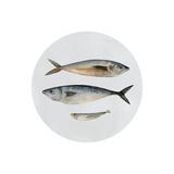 Three Fish I Plakater