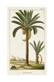 Turpin Exotic Palms IV Posters