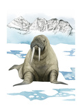 Arctic Animal III Giclée-Premiumdruck