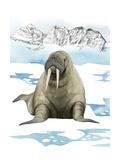 Arctic Animal III Lámina giclée prémium