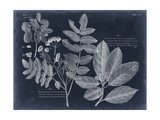 Foliage on Navy V Poster