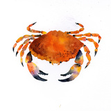Orange Crab Kunst von Rachel McNaughton