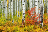 USA, Colorado, Aspen along McClure Pass in the Colorado Rockies Photographic Print by Christian Heeb