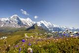 Colorful flowers framing Mount Eiger Mannlichen Grindelwald Bernese Oberland Canton of Berne Switze Impressão fotográfica por  ClickAlps