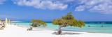 Caribbean, Netherland Antilles, Aruba, Divi Divi Trees on Eagle Beach Photographic Print by Jane Sweeney