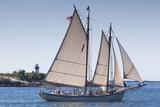USA, Massachusetts, Cape Ann, Gloucester, annual Gloucester Schooner Festival, schooner Parade of S Reproduction photographique par Walter Bibikw