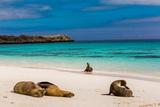 Sea lions on Floreana Island, Galapagos Islands, UNESCO World Heritage Site, Ecuador, South America Lámina fotográfica por Laura Grier