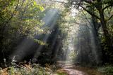 Autumn forest path, Surrey, England, United Kingdom, Europe Reproduction photographique par Charles Bowman