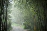 Bamboo Forest, Sichuan Province, China, Asia Photographic Print by Michael Snell