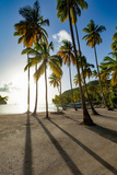 Tall palms and long shadows on the small beach at Marigot Bay, St. Lucia, Windward Islands, West In Impressão fotográfica por Martin Child