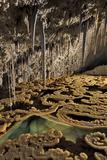 Rimstones, stalactites and a gour pool of water at Lake Castrovalva Fotografie-Druck von Joel Sartore
