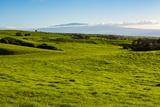 Lush pasture land, Waimea, Big Island, Hawaii Fotografisk trykk av Mark A Johnson