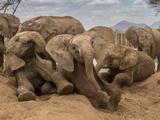 Orphan Elephants at a Water Hole in the Reteti Elephant Sanctuary Fotografie-Druck von Ami Vitale