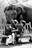 Elephant Having a Bite Foto von  Associated Newspapers