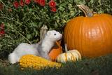 Ferret Lámina fotográfica por Lynn M. Stone
