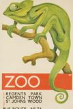 Zoo, Iguana London Bus Route No. 74 Advertising Poster Lámina fotográfica por Pollack, David