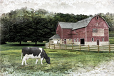 Cow Photo by Jennifer Pugh
