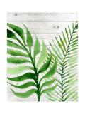 Banana Leaf II Posters tekijänä Tamara Robinson